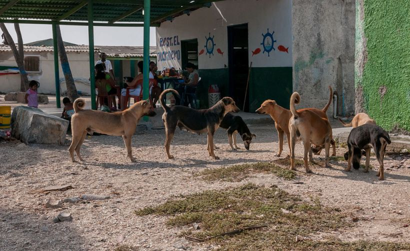 Stray dogs in Venezuela. Wikimedia Commons.